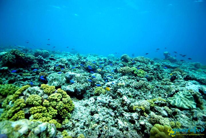 Gnaraloo Underwater