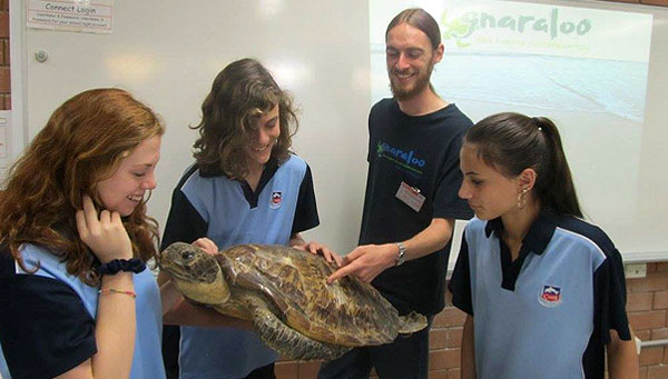 Sea turtle educational presentation in Australia