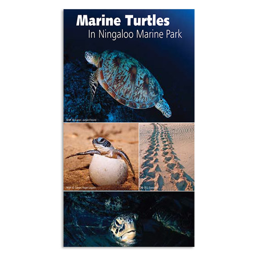 Marine Turtles in Ningaloo Marine Park brochure