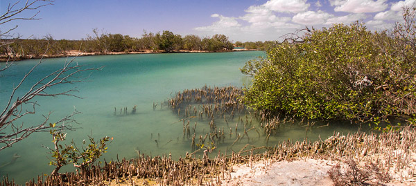 Lake MacLeod Blue Holes and mangroves in Western Australia