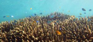Gnaraloo coral - Ningaloo Reef