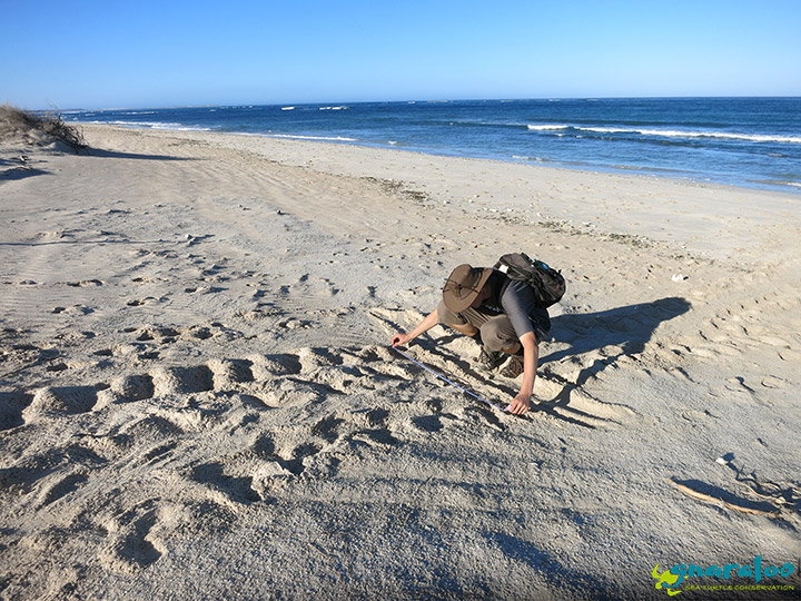 Turtle Track Monitoring