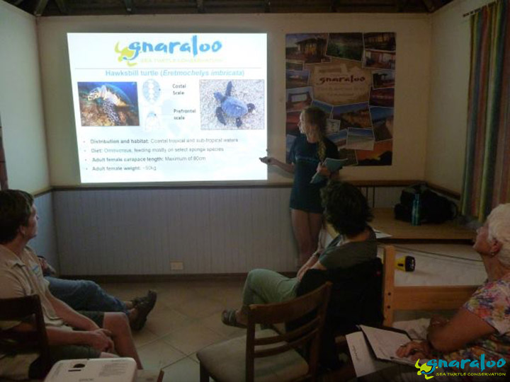 Sea Turtle Community Presentation