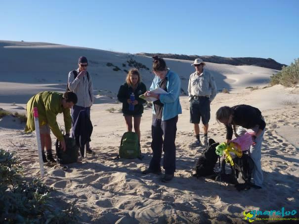 Sea turtle monitoring in Western Autralia