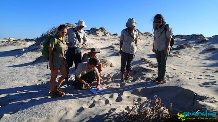 Gnaraloo Turtle Conservation Program