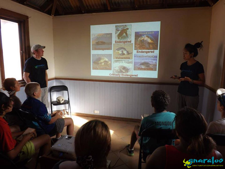 Sea turtle school presentation
