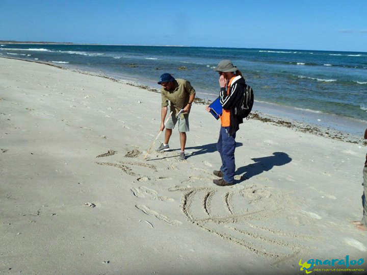 Turtle Track Training By Old Turtle Andrew Greenley!