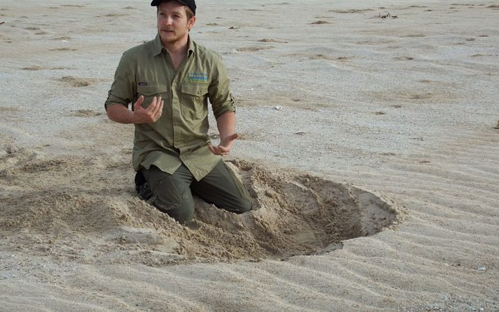 Turtle Track Indentification Training