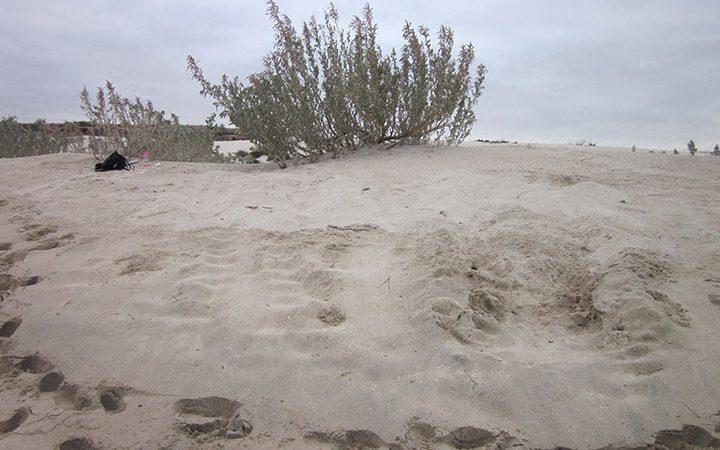 Sea Turtle Tracks