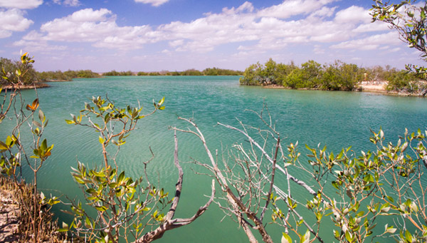 Lake MacLeod mangroves - Western Australia