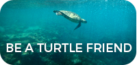 Become a Turtle Friend
