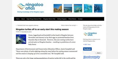 Ningaloo turtles off to an early start this mating season