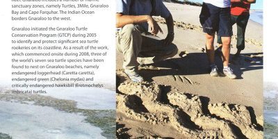 Gnaraloo Turtle Conservation Program monitoring endangered sea turtle rookeries