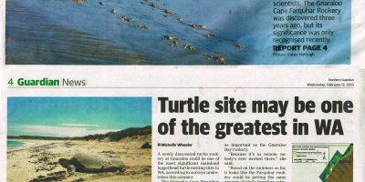 Turtle site may be one of the greatest in Western Australia