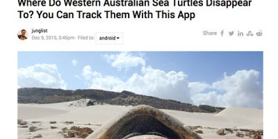 Where Do Western Australian Sea Turtles Disappear To? You Can Track Them With This App