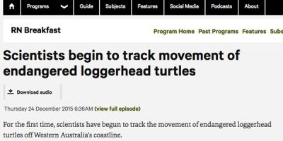 Scientists begin to track movement of endangered loggerhead turtles