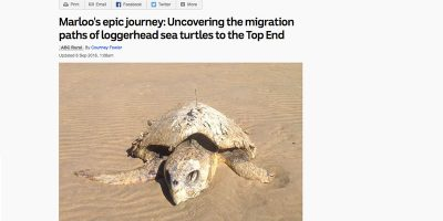 Marloo's epic journey: Uncovering the migration paths of loggerhead sea turtles to the Top End