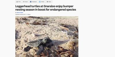 Loggerhead turtles at Gnaraloo enjoy bumper nesting season in boost for endangered species