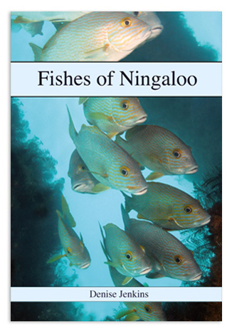 Fishes of Ningaloo by Denise Jenkins