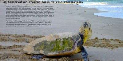 Turtles struggle to find a voice as Conservation Program fails to gain recognition