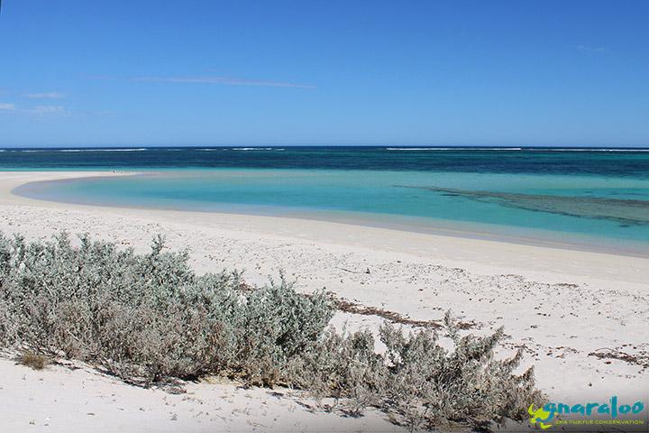 Cape Farquhar