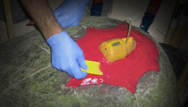 Female loggerhead sea turtle satellite tracked from Gnaraloo Bay