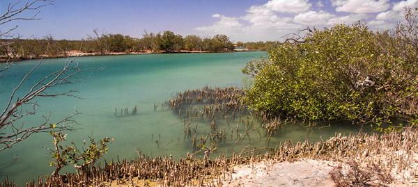 Lake MacLeod Blue Holes and mangroves in Western Australia