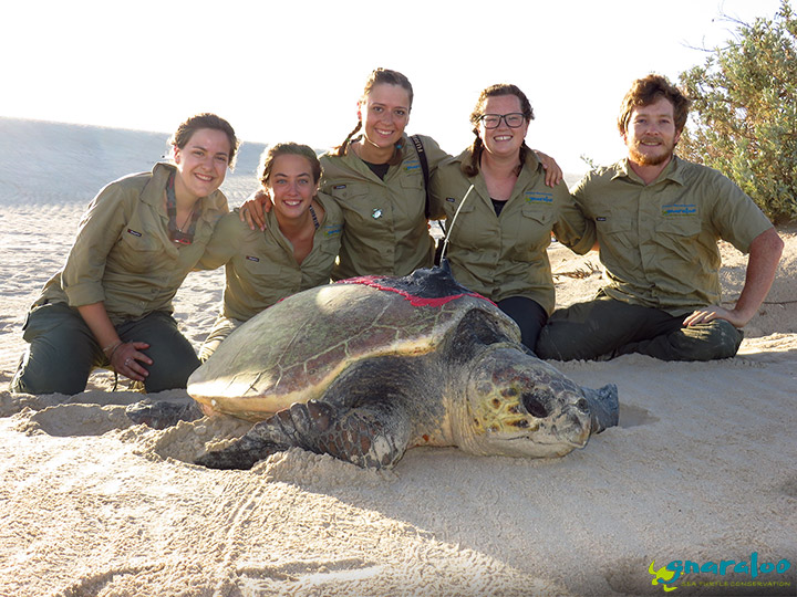 Satellite Tagged Turtle - Gnaraloo Turtle Conservation Program