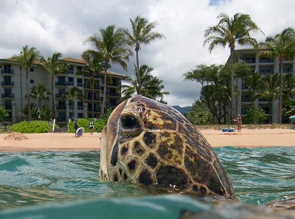 Turtle vs Hotels