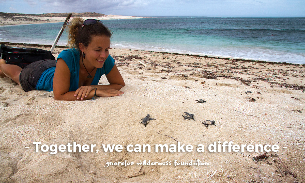 Together for the Gnaraloo sea turtles in Western Australia - Gnaraloo Wilderness Foundation