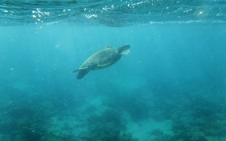 Swim With Sea Turtles, Gnaraloo, Ningaloo Reef, Western Australia