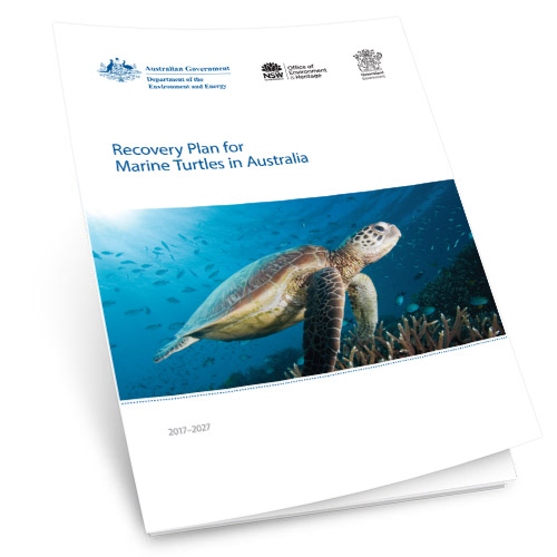 Marine Turtles in Australia