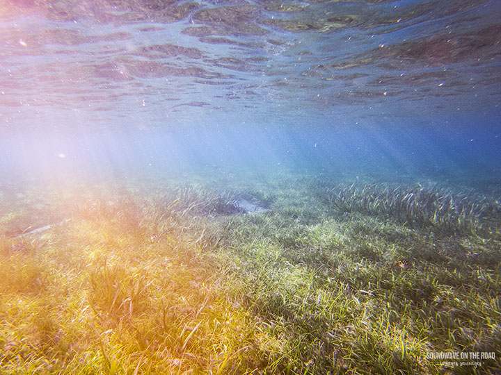 Protect Seagrass Meadows