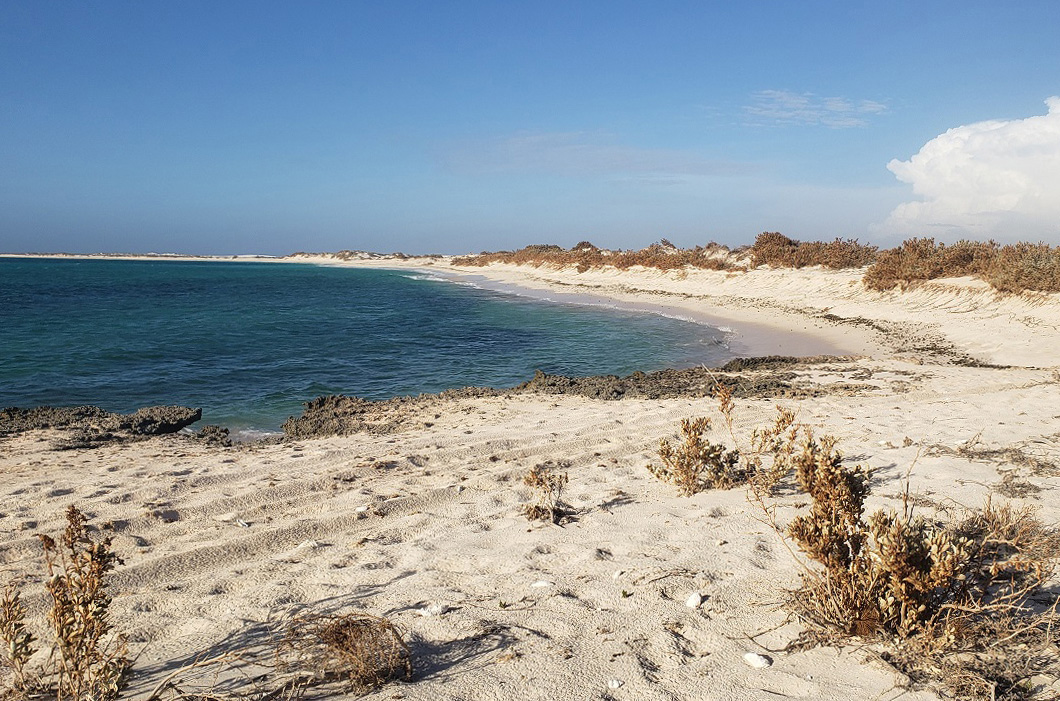 Vegetation disturbance and destruction in the Gnaraloo Cape Farquhar Turtle Rookery in the Ningaloo World Heritage Area – January 2021
