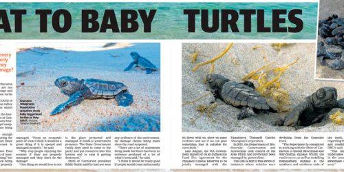 Threat to baby turtles - Gnaraloo - Ningaloo Reef